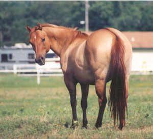 Aztec Stud - Equine colour genetics